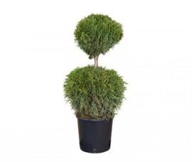 Thuja Smaragd  2 Globuri 100 cm
