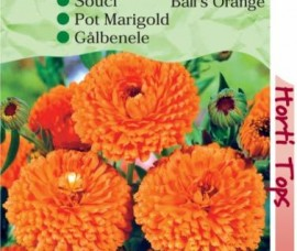 CALENDULA  OFFICINALIS BALLS ORANGE - galbenele